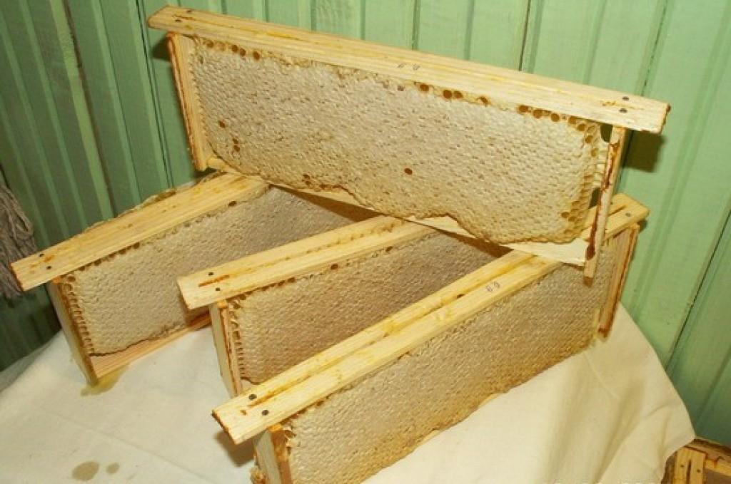 Продам Соты пчелиные с мёдом без антибиотика.  Продаю мёд буркун без антибиотика в Белой Церкви.