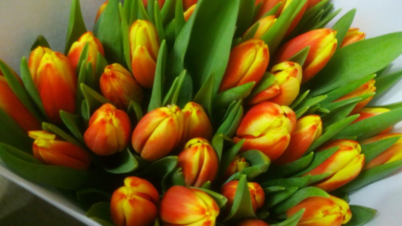 Скачать открытки тюльпаны