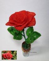 роза и фото п